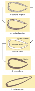 Transformaciones de los fósiles en el interior del sedimento