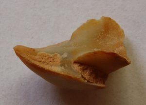 Vista lateral de la mandibula superior mineralizada de un ammonite