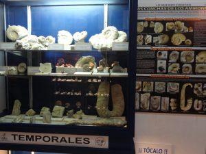 Exposición de ammonites en el Museo ISURUS