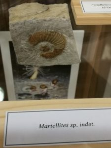 Martellites sp. indet.
