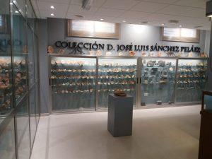 """Colección de ammonites donada por D. José Luis Sánchez Peláez. Centro de interpretación """"Cabra Jurásica""""."""