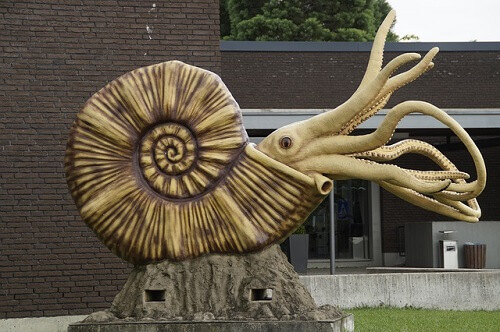 ¿Cómo eran los ammonites? Reconstrucción con aspecto parecido a cefalópodos actuales más evolucionados.