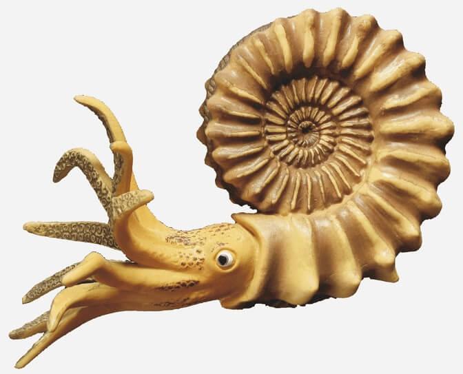 Reconstrucción hipotética de un ammonite