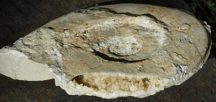 Ammnite jurásico que es una geoda