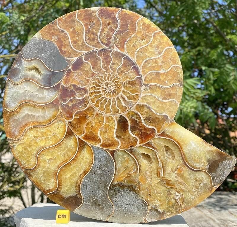 Ammonite con el interior relleno de carbonato cálcico