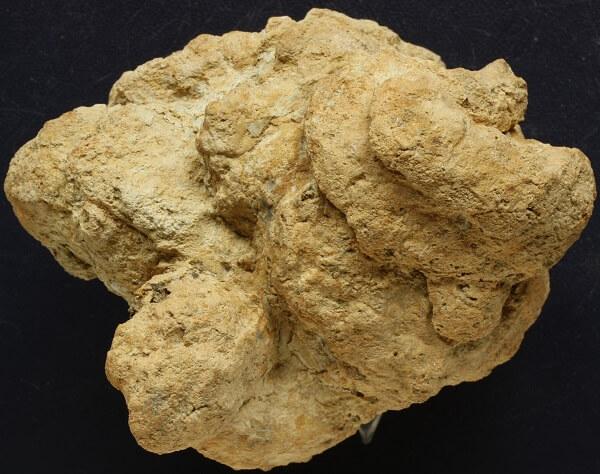 Coprolito de hiena fosilizado