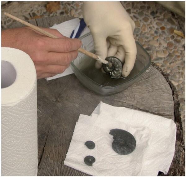 Ammonites de pirita: cómo se formaron y cómo conservarlos. Proceso de limpieza con acetona