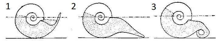 Rostros de algunos ammonites del género Mortoniceras